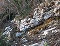 Livello argilloso a Orbitolina (Semprevisa Mt.).jpg