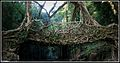 Living root bridges at Mawlynnong village, Cherrapunji.jpg