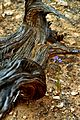 Log and Purple Flower DSC 0080.JPG
