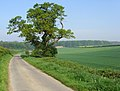 Low Balk Road, near Bishop Burton - geograph.org.uk - 796540.jpg