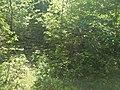 MD.RS - rezervația naturală silvică Stînca - apr 2018 - 04.jpg