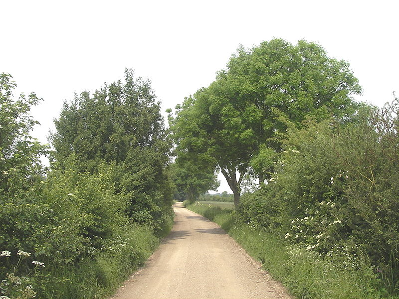 File:Maasheggen bij oeffelt 2.jpg