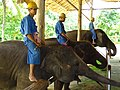 Mahouts and Elephants - Thai Elephant Conservation Center - Hang Chat - Thailand (35175478526).jpg