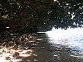 Mamangal Beach 3.jpg