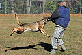 Man's best friend, airman's best wingman 131114-F-OB680-143.jpg