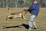 Man's best friend, airman's best wingman 131114-F-OB680-143.jpg