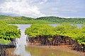 Mangrove - panoramio (5).jpg