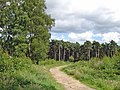 Manley - view along the Sandstone Trail - geograph.org.uk - 499654.jpg