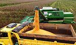 Maquinário agrícola do governo auxilia na colheita de milho em Capixaba (27123540082).jpg