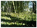 March Botanischer Garten Freiburg - Master Seasons Rhine Valley Photography - panoramio (10).jpg