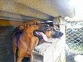Marinilla Colombia - Street Dogs (15).jpg