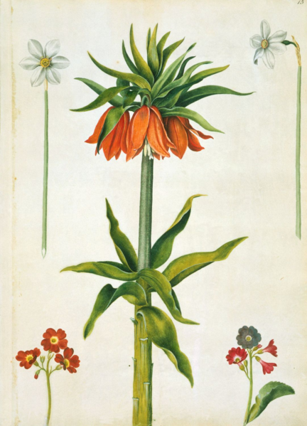 File:Marshal - Crown imperial, narcissi and auriculas.png