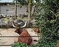 Maubeuge .- Zoo Eté2017 (30).jpg