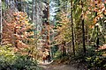 Merced Grove Redwood Grove Hike.jpg