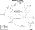 Metabolism of pethidine.png