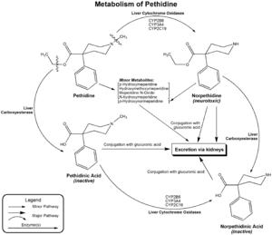 Pethidine - Image: Metabolism of pethidine