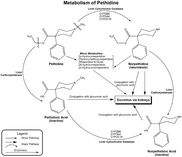 Metabolism of pethidine.png