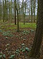Middleton Wood - geograph.org.uk - 1176459.jpg