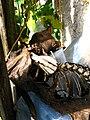 Moggessa di Quá mummified cat 2008 1004 07.JPG