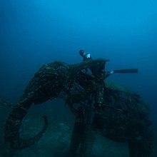 Freediving - Wikipedia