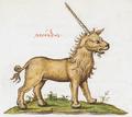 Monoceros - Burney MS 97.png