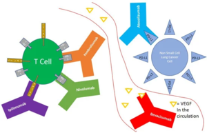Monoclonal antibodies used in the treatment of non small cell lung cancer and their mechanism of action