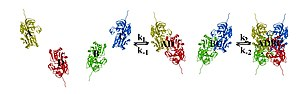 two protein subunits bind to form a dimer. Two dimers then bind to form the final tetramer.