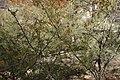 Montezuma Castle - 38638371642.jpg