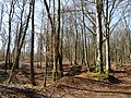 Montreuil-sur-Thonnance-Forêt communale (3).JPG
