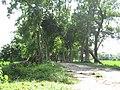 Mound of Chandraketugarh 05.jpg