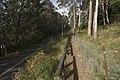 Mount Wilson NSW 2786, Australia - panoramio (46).jpg