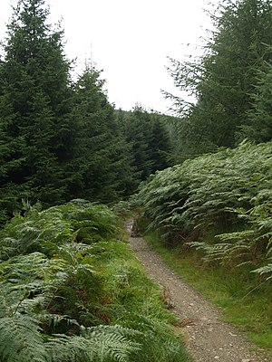 English: Mountain bike trail, Glentress Forest...