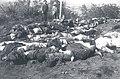 Muertos en la batalla de Placilla 1891.jpg