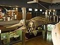 Museo Marítimo del Cantábrico (227).jpg
