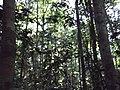 NA SELVA - panoramio (1).jpg