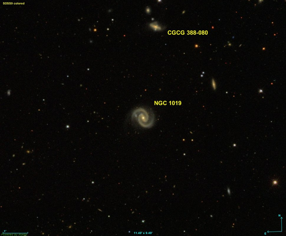 NGC 1019 SDSS