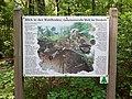 NP-Waldboden.jpg
