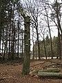 Nabij Kasteel Staverden - panoramio - Rokus C (2).jpg