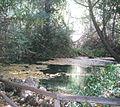Nacimiento del río Huéznar.jpg