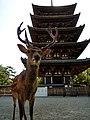 Nara07.jpg