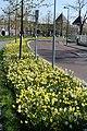 Nassausingel Breda P1360709.jpg