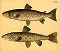 Naturgeschichte in Bildern mit erläuterndem Text (Taf. CXXIV) (6058680425).jpg
