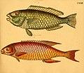 Naturgeschichte in Bildern mit erläuterndem Text (Taf. LXXIII) (6059216800).jpg