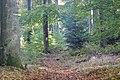 Naturpark und Biosphärenreservat Pfälzerwald - panoramio (8).jpg