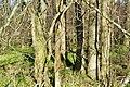 Naturschutzgebiet Haseder Busch - Am nordwestlichen Rand (4).jpg