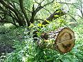 Naturschutzgebiet Heuckenlock 21.05.2014 Phase 107.JPG