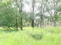 Naturschutzgebiet Heuckenlock 21.05.2014 Phase 40.JPG