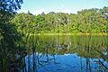 Naturschutzgebiet Krumme Laake Berlin 3.jpg