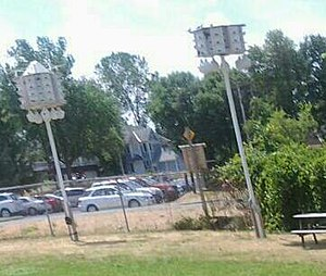 Purple martin - Nest boxes at Nepean Sailing Club in Nepean, Ontario, Canada