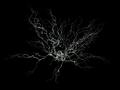 Neuron-SEM-2.png